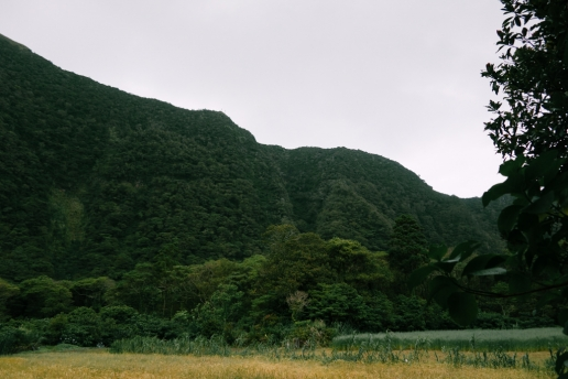 Lush green crater wall seen from inside, Aogashima Island, Tokyo