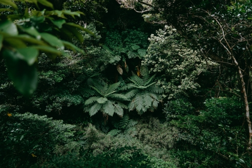 Hiking in tree fern jungle of Hachijo Island, Tokyo
