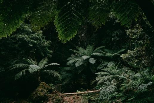 Tree fern jungle hike, Hachijo Island, Tokyo