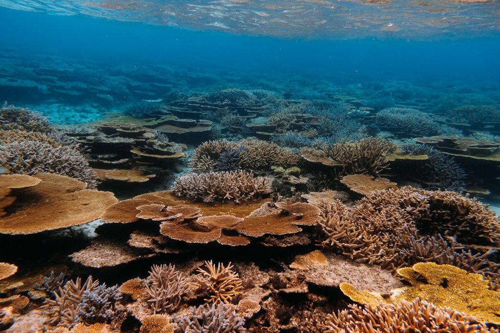 Healthy coral reefs of Japan, Yabiji Reef, Miyako Island, Okinawa