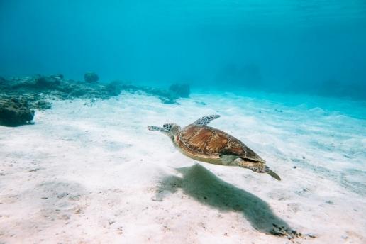 Snorkeling with sea turtle in southern Japan, Tokashiki Island, Okinawa