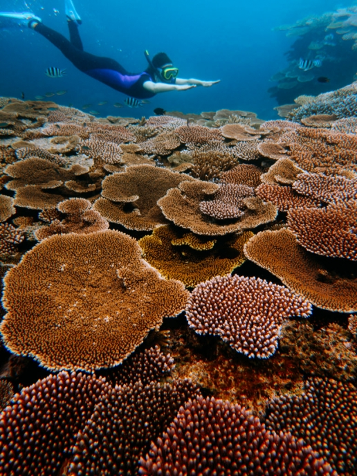 Snorkeling pristine coral reef, Hatoma Island, Okinawa, Japan
