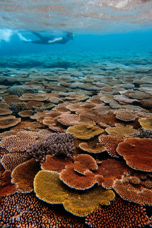 Pristine coral reef in 2020, Yaeyama Islands, Okinawa, Japan