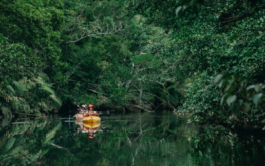 Jungle river kayaking, Iriomote Island, Okinawa, Japan