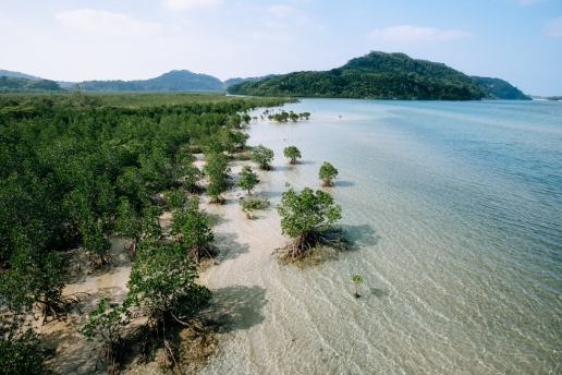 Urauchi river with mangrove swamp, Iriomote Island of the Yeayama Islands, Okinawa, Japan