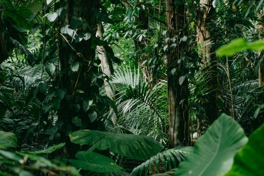 Tropical rainforest jungle of Japan, Ishigaki of Yaeyama Islands, Okinawa