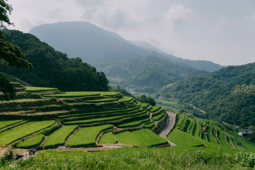 Rice terraces in Japanese countryside, Shodoshima Island, Kagawa