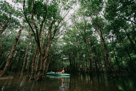 Mangrove kayaking on Ishigaki Island, Okinawa, Japan