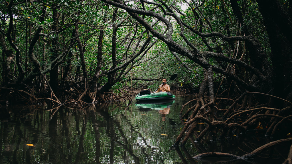 Mangrove jungle kayaking in Japan, Ishigaki-jima of the Yaeyama Islands, Okinawa