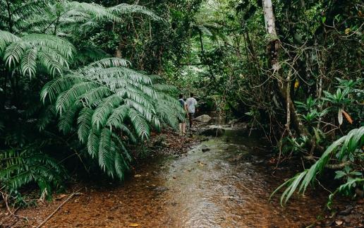 Jungle hiking on Ishigaki Island, Okinawa, Japan