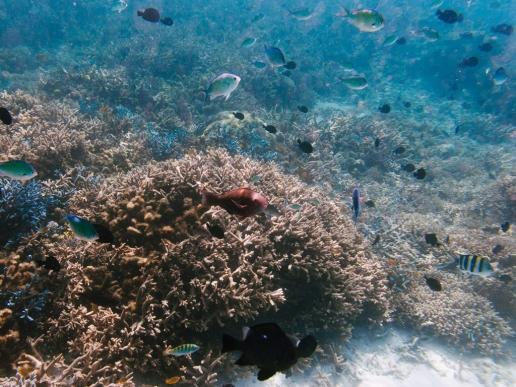 Off-the-beach snorkeling over coral garden, Kerama Islands, Okinawa, Japan
