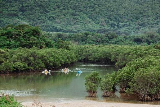 Mangrove kayaking, Ishigaki, Okinawa, Japan