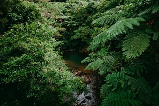 Jungle of Amami Oshima Island, Kagoshima, Japan