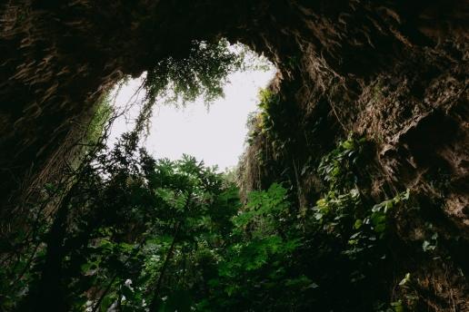 Limestone cave and wild papaya trees on Miyako-jima Island, Okinawa, Japan