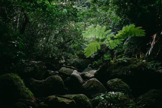 Stream trekking in tropical rainforest of Japan, Iriomote Island, Okinawa