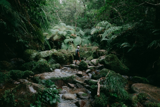 Jungle stream trekking on Iriomote Island, Okinawa, Japan