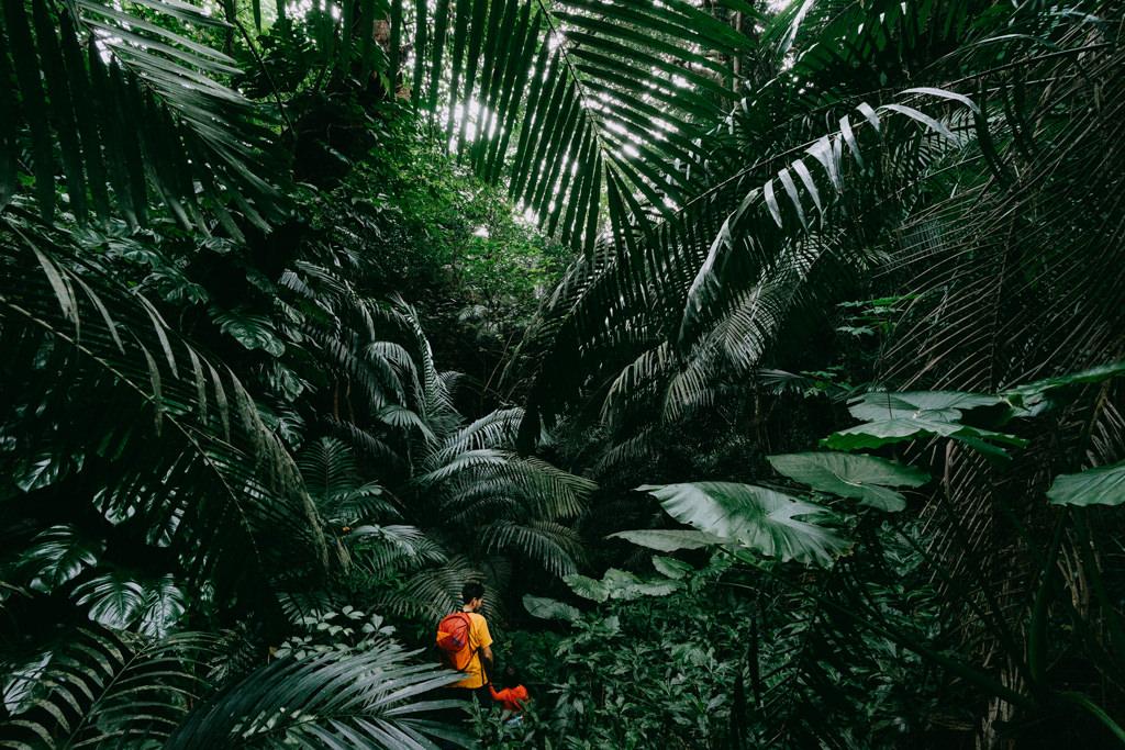 Hiking in Japanese jungle, Iriomote Island, Okinawa