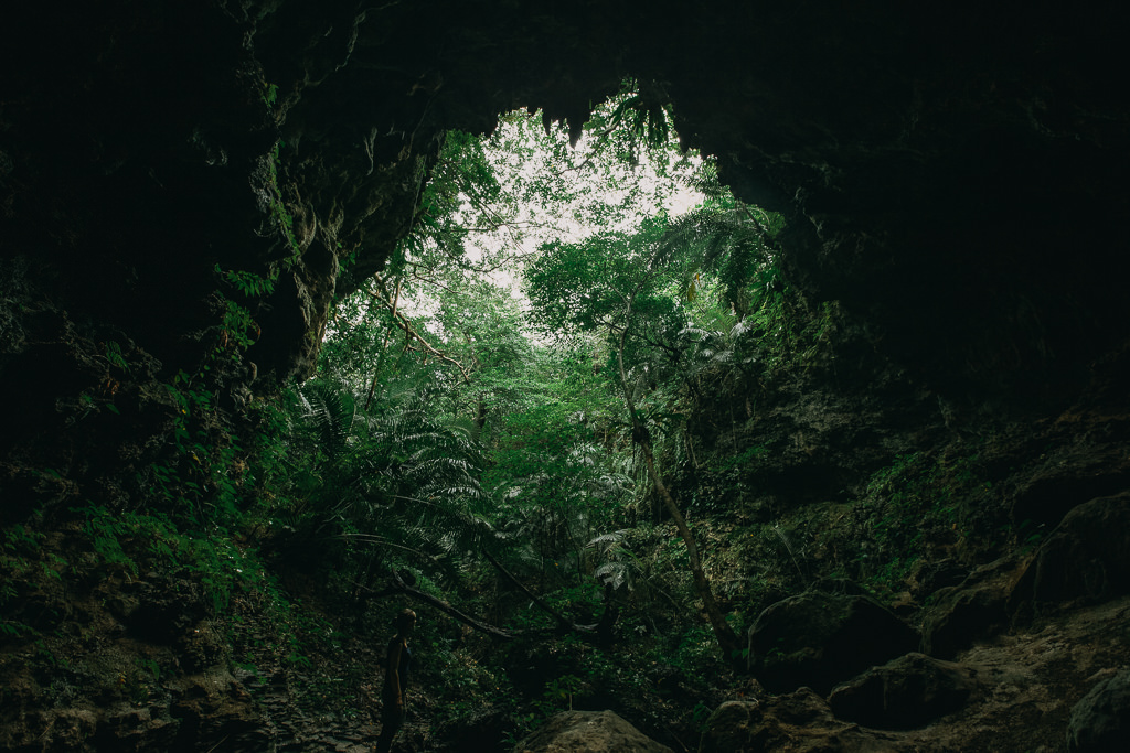 View of tropical rainforest from a limestone cave, Japan, Iriomote-jima of Yaeyama Islands