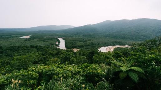 Japan's largest mangrove swamp, Iriomote Island, Okinawa