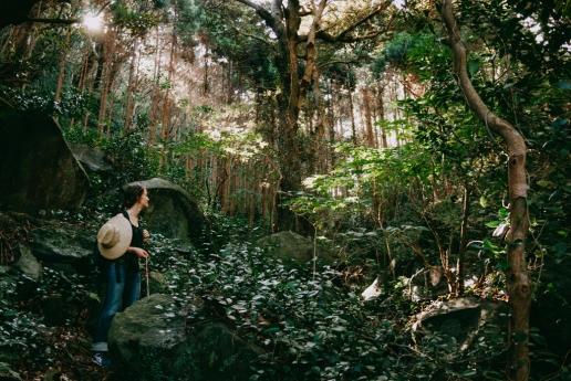 Hiking in Mikura-jima's evergreen rain forest, Tokyo, Japan