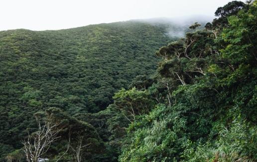 Evergreen temperate rainforest of Mikura-jima, Tokyo, Japan