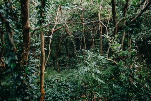 Hiking in the jungle of Mikura-jima Island, Tokyo, Japan