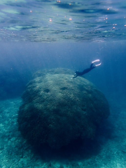 Snorkeling over massive coral in southern Japan, Yaeyama Islands, Okinawa