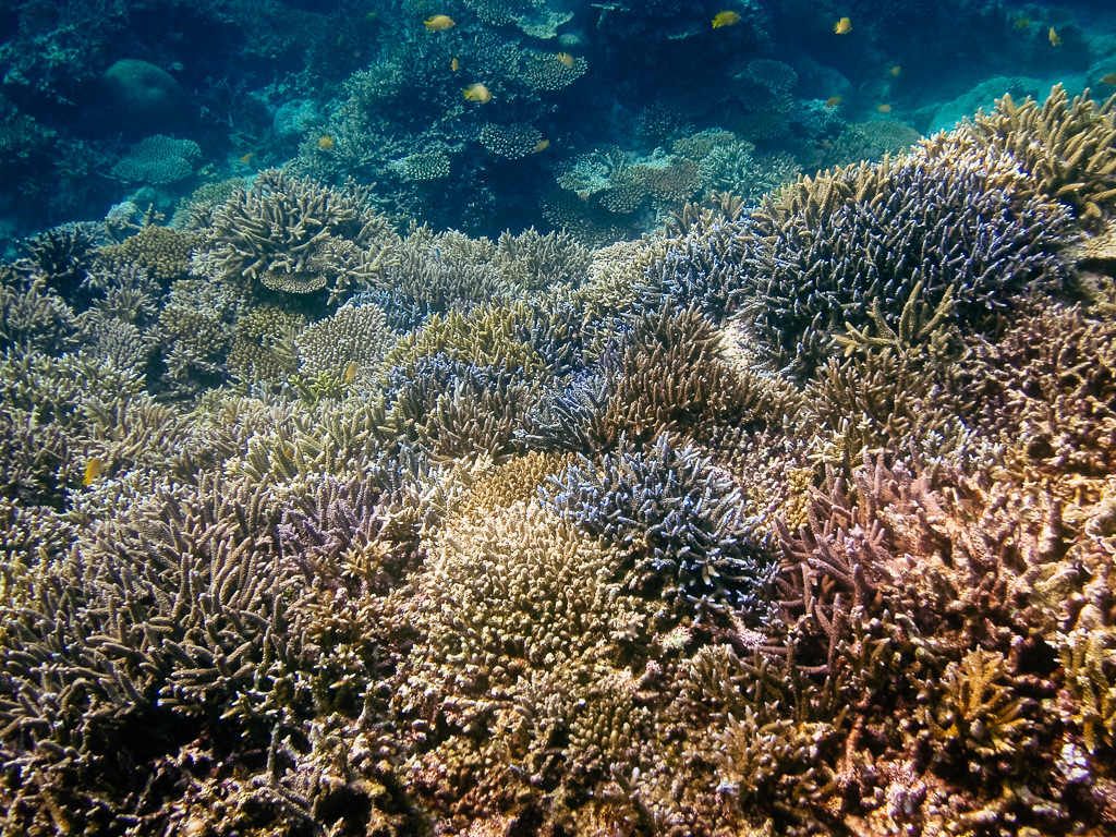 Coral reef snorkeling around Ishigaki Island, Okinawa, Japan