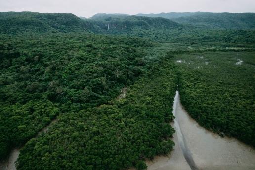 Aerial view of Japan's virgin jungle, Iriomote Island, Okinawa