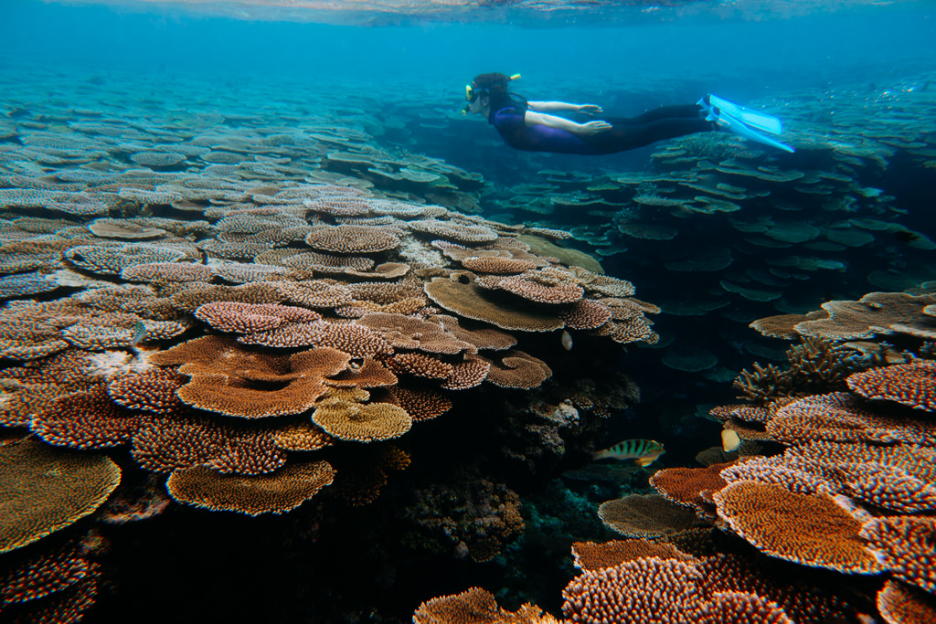 Snorkeling healthy coral reef of Hatoma Island, Okinawa, Japan