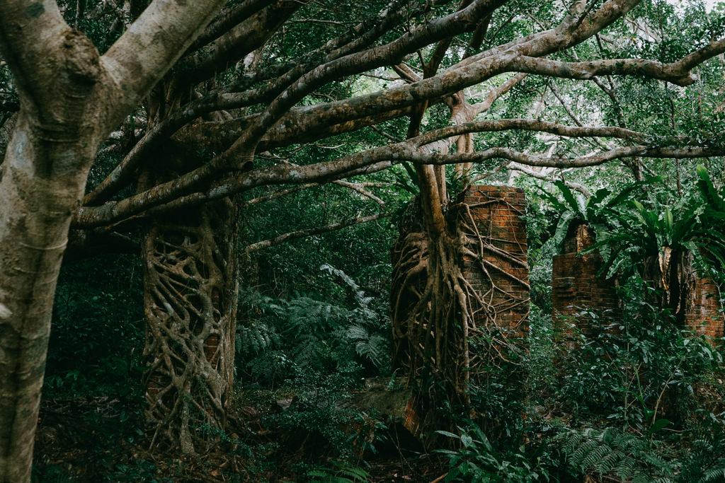 Village taken over by jungle, Iriomote Island, Okinawa, Japan